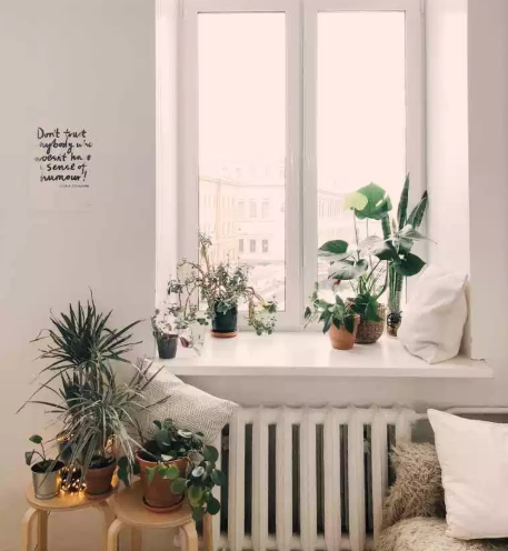 Dépolluer son intérieur grâce aux plantes!